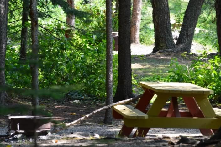 Treed Campsites